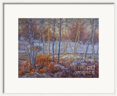 Birches In First Snow Framed Print By Fiona Craig - framing idea. See also www.fionacraig.com