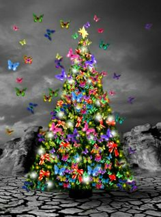 Christmas Love, Winter Christmas, Color Splash, Color Pop, Splash Images, White Rainbow, Colorful Candy, Butterfly Wings, Photo Colour