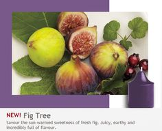 NEW!  Fig Tree: Juicy, earthy and incredibly full of flavor.  Savor the sun-warmed sweetness of fresh fig. MMM.