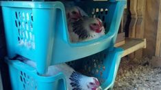 DIY Chicken Nesting Boxes Buckets | Request PHOTOS of your nesting box - Page 2 #chickencoopdiy