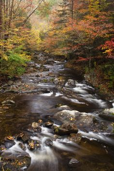 It's no wonder why so many love to visit the Smokies in the fall.