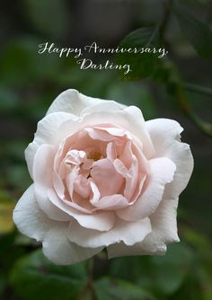 Rose Pink is a sympathy card featuring a rose pink and white rose set against dark green foliage and text 'Heartfelt Condolences' White Roses, Pink Roses, Pale Pink, Sympathy Cards, Greeting Cards, Heartfelt Condolences, Pink Cards, Happy Anniversary, White Envelopes