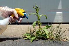 DIY Weed Killer plus natural additives Lawn And Garden, Garden Tools, Garden Web, Organic Gardening, Gardening Tips, Weed Killer Homemade, Weeds In Lawn, Plantation, Garden Plants