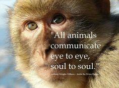 Animals communicate. Too