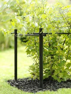 Most Popular Kitchen Garden Design Ideas 30 Herb Garden Design, Love Garden, Dream Garden, Patio Pergola, Greenhouse Gardening, Garden Trellis, Terrace Garden, Hedges, Garden Planning