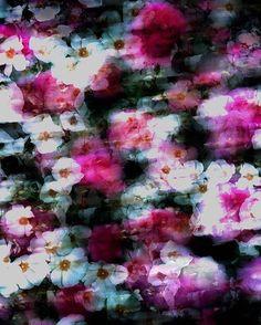 Blurred Blossom » https://patternbank.com/beccybland #floral #fabric #activewear #sportswear #swimwear #patternbank #yoga #textiledesign #fashion #surfwear #designstudio #resortwear #pattern #roses #blossom #ss17 #textiles #fashion IG: @beccy_bland