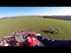 Feeding sheep in England | GoPro