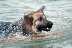 Dog Shampoo Alternatives
