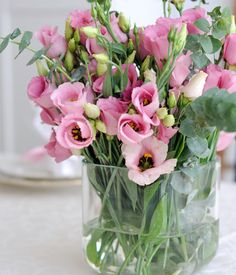 Japanrose (Eustoma grandiflorum) - [LIVING AT HOME]
