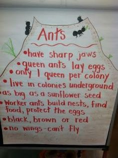 Life Is Sweet.In Kindergarten!: Going Buggy Part 2 Ant Crafts, Insect Crafts, Insect Activities, Preschool Activities, Language Activities, Kindergarten Science, Buggy, Bugs And Insects, Science Lessons