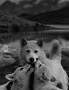 Mostrando afecto.