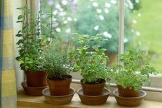 Herb in pot, mint, thyme, basil & parsley on window sill september - Howard Rice/Photolibrary/Getty Images