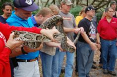 Class is filling fast!  Python Patrol trains people to identify, report and safely capture Burmese pythons. The more people trained to look for these snakes, the more people there are to help stop the spread of this invasive species! New training days have just been scheduled in Homestead on April 11 and April 18! Get more info and sign up here: http://myfwc.com/wildlifehabitats/nonnatives/python/python-patrol/   MyFWC - Google+ 2015