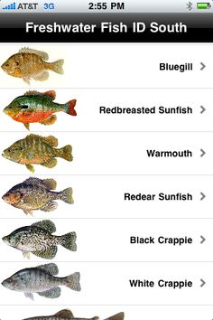 Freshwater Fish ID South helps you identify fish that live in freshwater in the southern part of the U.S.