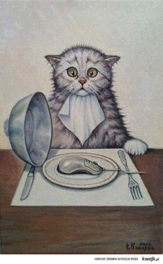 cat is eating