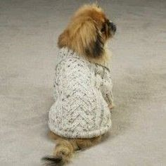 6 Free Dog Coat Knitting Patterns - Keep your dog Warm and Cozy with a New Coat! 6 Free Dog Coat Knitting Patterns - Keep your dog Warm and Cozy with a New Coat! Knitting Patterns For Dogs, Dog Clothes Patterns, Free Knitting, Knitting Projects, Crochet Patterns, Knitted Dog Sweater Pattern, Dog Coat Pattern, Knit Dog Sweater, Sweater Patterns