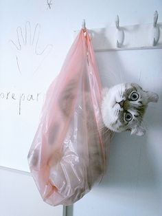 I try to just look at the picture and go...aw cute, but the mom in me sees only that the sweet cat shouldn't be IN a plastic bag!....Wow....it  is a sweet cat.