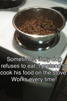 If your dog wont eat - #Dogs, #Pets