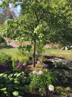 Kivipolkujen ja vesiaiheen lisäys uudistettujen perenna-alueiden äärelle lisää puutarhan kiinnostavuutta. Gal Gadot, Investigations, Blessings, Stepping Stones, Sword, Garden Design, Outdoor Decor, Plants, Stair Risers