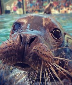 Baby sea lion Bixby-my own sea lion is my dream come true!