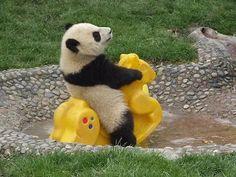 """Panda at the playground."" https://sumally.com/p/913667?object_id=ref%3AkwHOAAN32oGhcM4ADfED%3A9YZK"