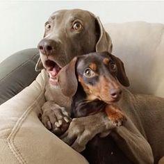 Estos perros que acaban de ver la factura de tu tarjeta de crédito, y santo cielo.   21 Perros que están juzgando las cosas que haces en la vida