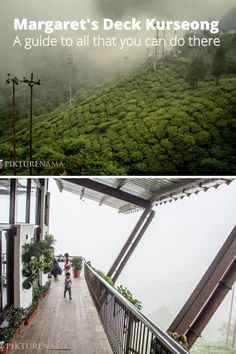 Darjeeling is one of the most preferred travel destination for people from Kolkata as well as from other parts of the country. Check out this blogpost for more details on Margaret's deck which is a very very popular place here. #kurseong #Darjeeling #Margaretsdeck #Westbengal #bengaltourism #Darjeelingtravelplan #pikturenamatravels #pikturenama Green Tea Cookies, Wooden Ramp, Hanging Orchid, Bamboo Planter, Tea Lounge, Foggy Morning, Darjeeling, World Heritage Sites, Asia Travel