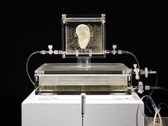 German museum shows live replica of van Gogh's ear - 「ゴッホの耳」を軟骨細胞から復元