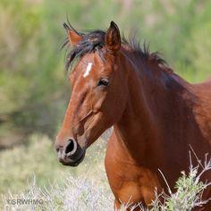 Top 10 Beautiful Salt River Wild Horses