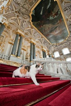 """This is Francesca, one of the Hermitage Museum cats, on the Jordan Staircase. """"Proud of her famous namesake, she performs her own version of arias from the eponymous opera in the dead of night in the museum vaults. Anyone who strokes her trichromatic coat gets special treatment.""""  You can read more about the Hermitage cats here:    https://02varvara.wordpress.com/tag/hermitage-museum/"""