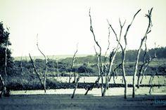 "Photo ""troncos secos"" by eltonrocha"