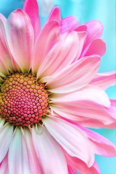 sunflower wallpaper for android Sunflower Wallpaper, Flower Background Wallpaper, Flower Backgrounds, Nature Wallpaper, Pink Flower Wallpaper, Flor Iphone Wallpaper, Wallpaper Backgrounds, Beautiful Flowers Wallpapers, Pretty Wallpapers