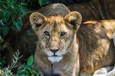 Tag 7: Serengeti - Ngorongoro Area - Ngorongoro Wildcamp