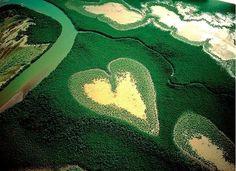 Сердце из мангровых деревьев, Новая Каледония, Франция