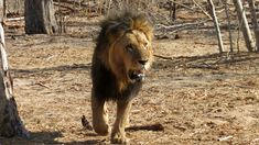 Film Trailer, Namibia, Channel, Youtube, Animals, Zimbabwe, Oral Hygiene, Adventure Tours, Natural Wonders