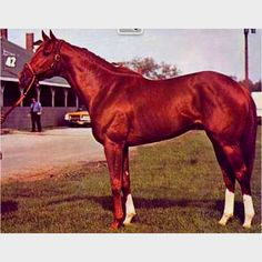 """Big Red"" himself - Secretariat"