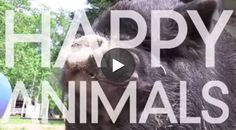 The BEST start to your day, GUARANTEED.  WATCH 70+ Happy Animals: http://youtu.be/DqG4QKlTLwY  #HappyDays