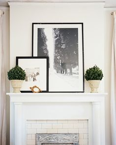 Framed black-and-white photography flanked by a pair of potted topiaries.