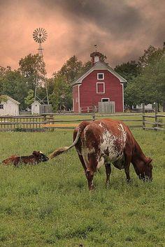 clouds barn cows windmill
