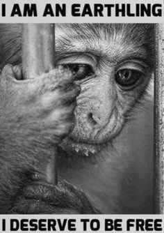 This monkey does deserve to be free!