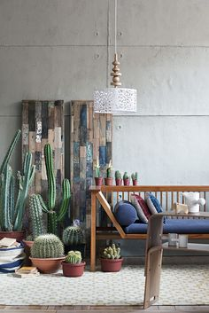 "ED/ Oct - Dec 2010 "" Cactus Love"" by gozde eker, via Flickr"