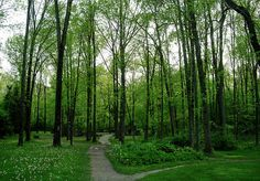 Guildwood Park in Toronto has two winding nature trails to choose from
