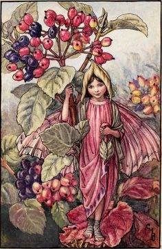 Wayfaring Tree Fairy - Cicely Mary Barker