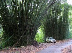 The World's Best Road Trips: Take the Panoramic Route in Puerto Rico