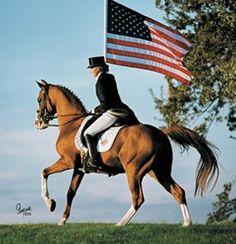 Aul Magic (Aulrab x Magic Alarieha) A 1985 Arabian stallion Work Horses, Cute Horses, Pretty Horses, Show Horses, Horse Ears, My Horse, Horse Love, Arabian Stallions, Arabian Horses