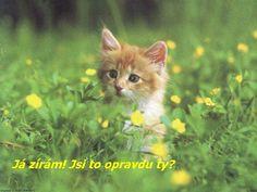 HD Kitten Wallpaper Behind Yellow Flowers – Cool HD Wallpapers Pretty Cats, Beautiful Cats, Animals Beautiful, Cute Cats And Kittens, Kittens Cutest, Cute Baby Animals, Funny Animals, Kitten Wallpaper, Orange Cats