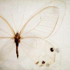le papillion • irene suchocki