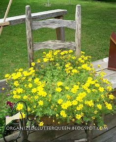 Chair Planter Ideas Garden Chair Ideas: Yellow Bidens really filled out nicely planted in the weathered gray chair. My chair has a chicken wire seat and I use a coco liner inside to keep the dirt in Garden Junk, Lawn And Garden, Garden Art, Garden Design, Home And Garden, Garden Ideas, Diy Planters, Garden Planters, Planter Ideas