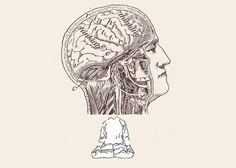 The emerging field of contemplative neuroscience | Mindful