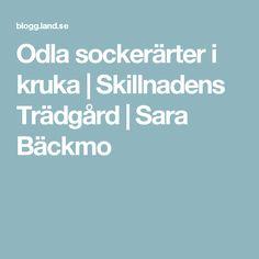 Odla sockerärter i kruka   Skillnadens Trädgård   Sara Bäckmo